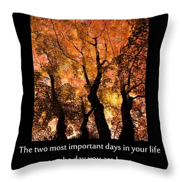 Discovery Throw Pillow by Don Schwartz