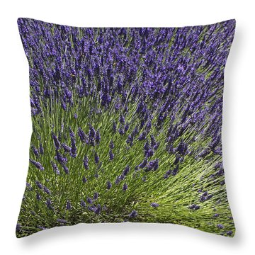 Divergence Throw Pillow by Elvira Butler