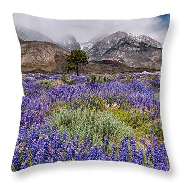Division Creek Lupine Throw Pillow