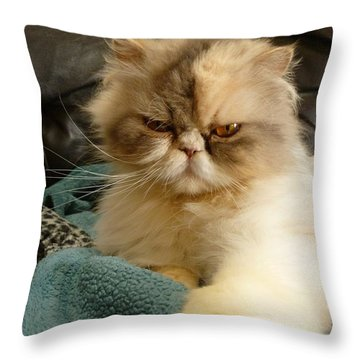 Throw Pillow featuring the photograph Do I Look Amused? by Vicki Spindler