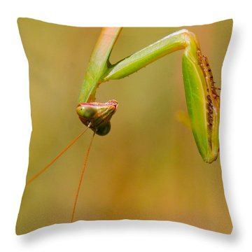 Do You Mind? Throw Pillow