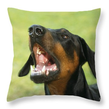 Doberman Pinscher Dog Throw Pillow by John Daniels