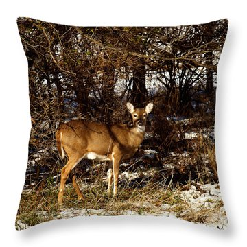 Doe From The Tangle Throw Pillow by Thomas Young