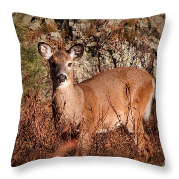 Doe Throw Pillow by K Hines