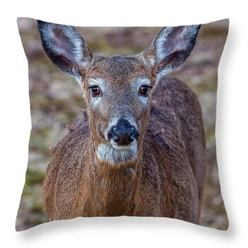 Doe Portrait Throw Pillow
