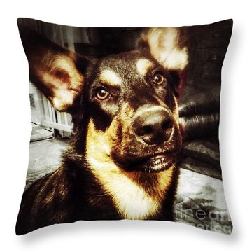 #dog #darcy #dogoftheday Throw Pillow