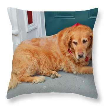 Dog In Waiting Throw Pillow by Eva Kaufman