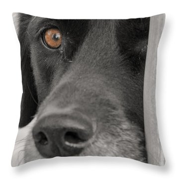 Dog Peek A Boo Throw Pillow