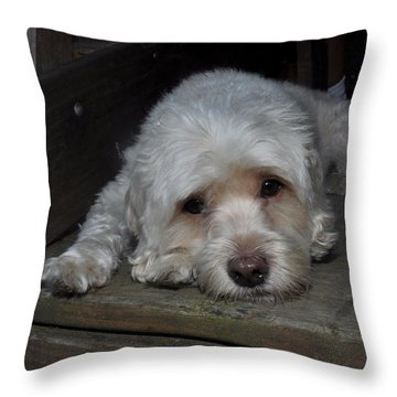 Dog Resting On Porch Throw Pillow by Diane Lent