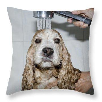 Dog Taking A Shower Throw Pillow by Mats Silvan