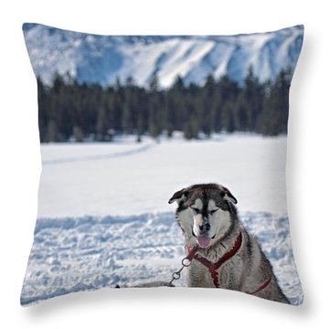 Dog Team Throw Pillow by Duncan Selby