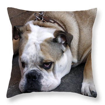 Dog. Tired. Throw Pillow