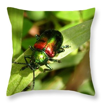 Throw Pillow featuring the photograph Dogbane Beetle by Carlee Ojeda