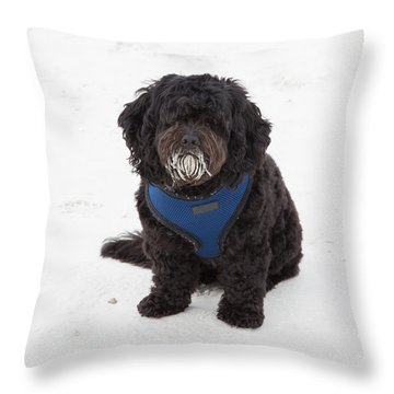 Doggone Good Beach Fun Throw Pillow