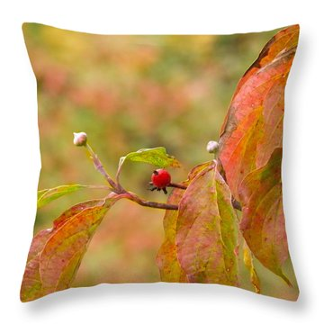 Throw Pillow featuring the photograph Dogwood Berrie by Nick Kirby