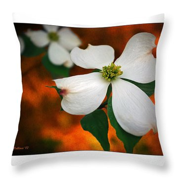 Dogwood Blossom Throw Pillow by Brian Wallace