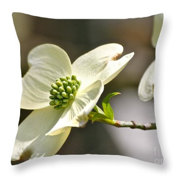 Dogwood Delight Throw Pillow by Eve Spring