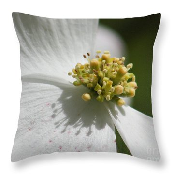 Dogwood Up Close Throw Pillow