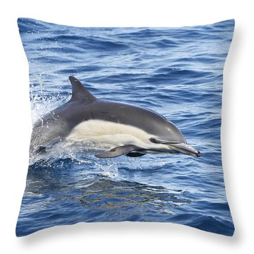 Dolphin At Play Throw Pillow