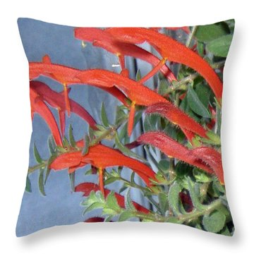 Throw Pillow featuring the photograph Dolphin Plant by Brenda Brown