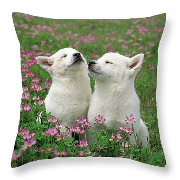 Domestic Dog Canis Familiaris Puppies Throw Pillow by Yuzo Nakagawa