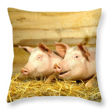 Domestic Pigs Throw Pillow by Hans Reinhard