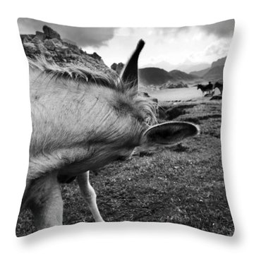 Donkeys Throw Pillow