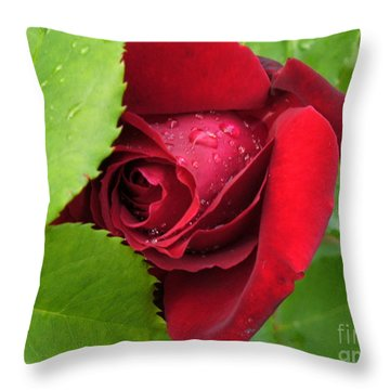 Don't Cry For Me Rosanna Throw Pillow