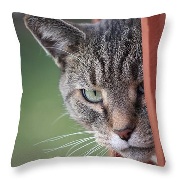 Don't Mess With Gilbert Throw Pillow by Jennifer E Doll