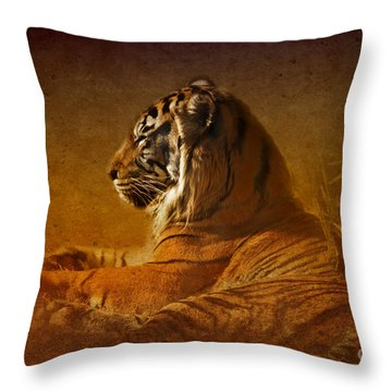 Don't Wake A Sleeping Tiger Throw Pillow by Betty LaRue