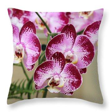 Doritaenopsis Jiuhbao Fairy Throw Pillow