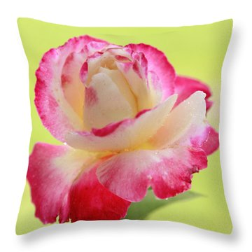 Double Delight Red Rose To Fall In Love  Throw Pillow by Alex Khomoutov