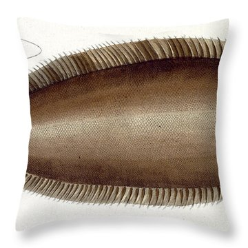 Dover Sole Throw Pillow by Andreas Ludwig Kruger