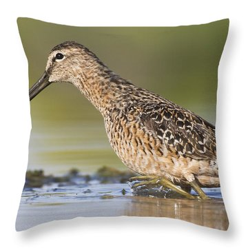 Dowitcher In The Water Throw Pillow