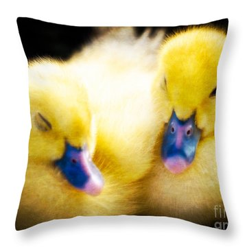 Downy Ducklings Throw Pillow by Edward Fielding