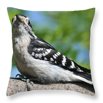 Downy Woodpecker 302 Throw Pillow