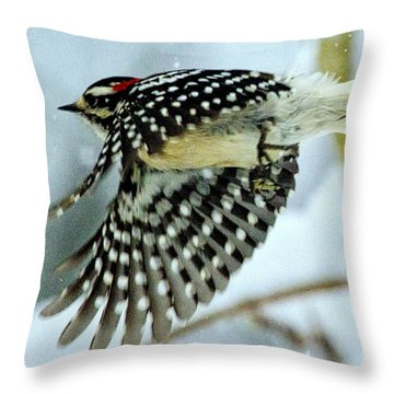 Downy Woodpecker In Flight Throw Pillow by Constantine Gregory