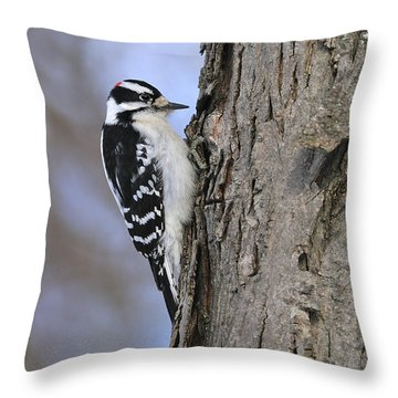 Downy Woodpecker Throw Pillow by Tony Beck