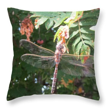 Throw Pillow featuring the photograph Dragon Fly by Cathy Long