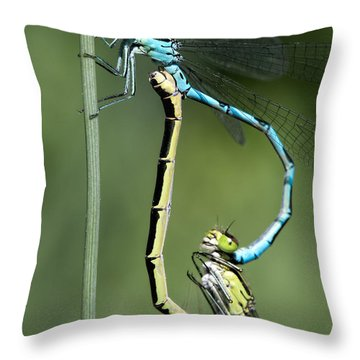 Dragon Fly Throw Pillow by Leif Sohlman