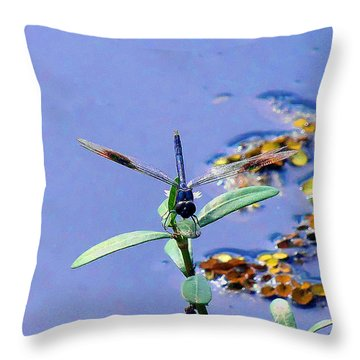 Throw Pillow featuring the photograph Dragonfly 000 by Chris Mercer
