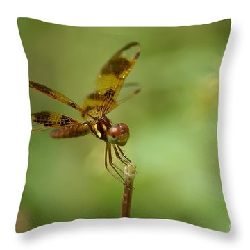 Throw Pillow featuring the photograph Dragonfly 2 by Olga Hamilton