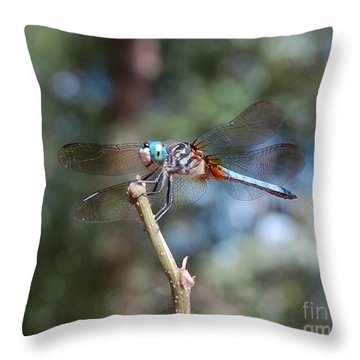 Dragonfly Aqua 1 Throw Pillow