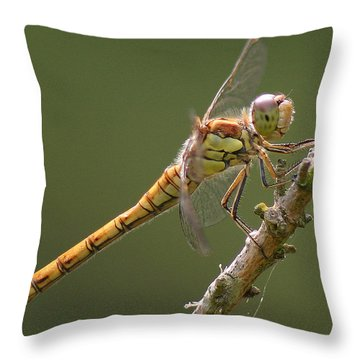 Dragonfly At Rest Throw Pillow by John Topman