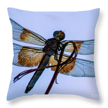 Dragonfly-blue Study Throw Pillow