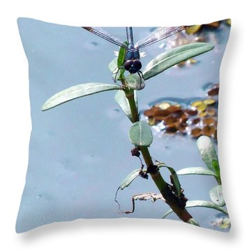 Throw Pillow featuring the photograph Dragonfly by Chris Mercer