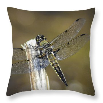 Throw Pillow featuring the photograph Dragonfly Detailed by Mitch Shindelbower