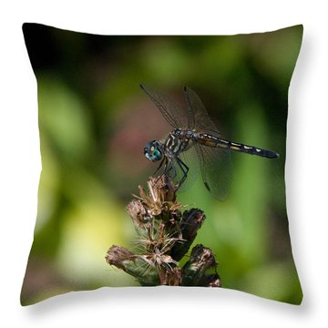 Throw Pillow featuring the photograph Dragonfly by Greg Graham