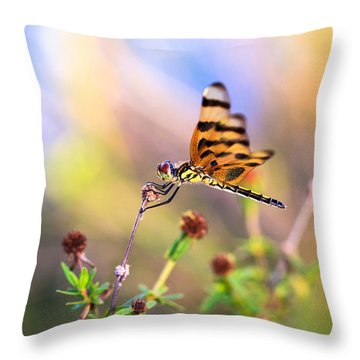 Dragonfly Throw Pillow by Jonathan Gewirtz