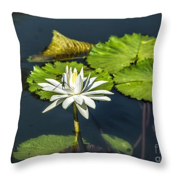 Dragonfly Kisses A Waterlily Throw Pillow